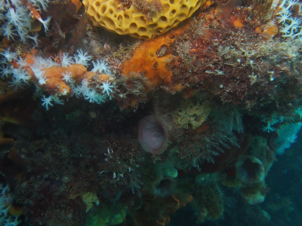 Australia Underwater Map.Seamap Australia National Marine Benthic Habitat Map